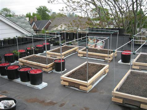 rooftop vegetable garden  adapted raised  deep
