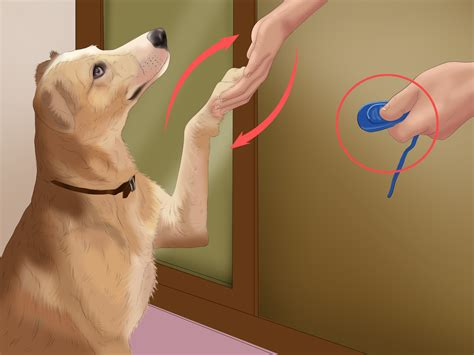 how to train your dog to use bathroom outside how to train your dog to go to the bathroom image