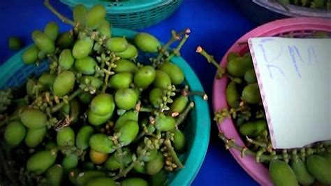 borneo fruits food  sabong fruit nut gnetum gnemon