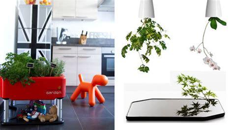 plante cuisine plante pour cuisine fashion designs