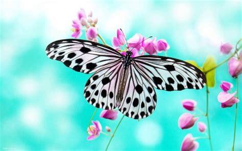 wallpaper bergerak kupu kupu binatang gambar kupu kupu hd wallpaper and background foto