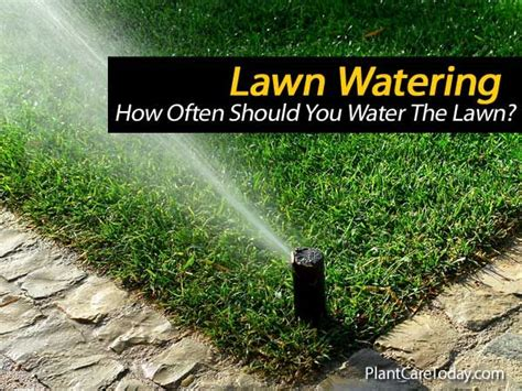 24 Best Images About Lawn On Pinterest How Often To Water Vegetable Garden