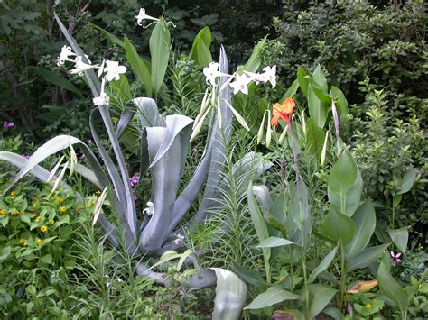 plants for conditions plant drought tolerant trees shrubs perennials this fall