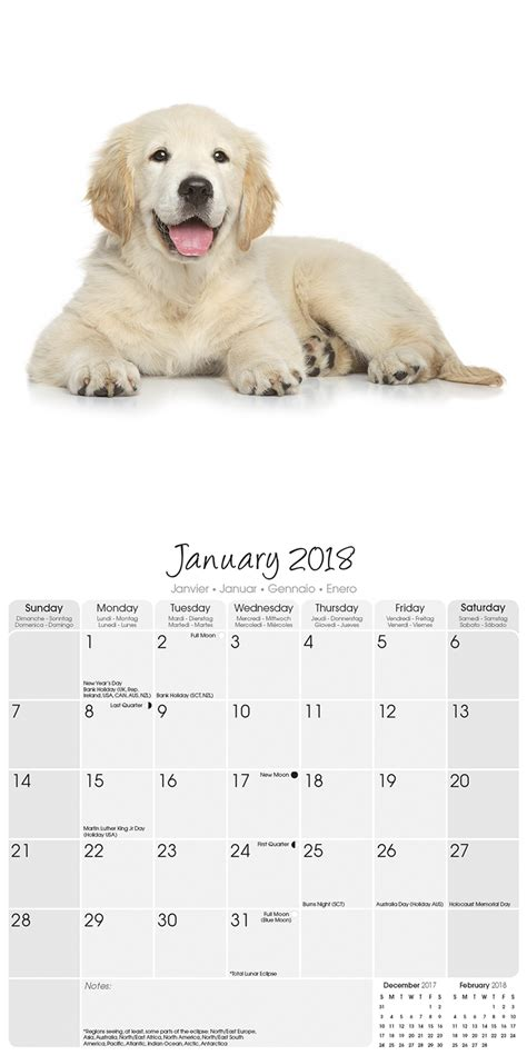golden retriever buy golden retrievers calendar 2018 30464 golden retriever breeds