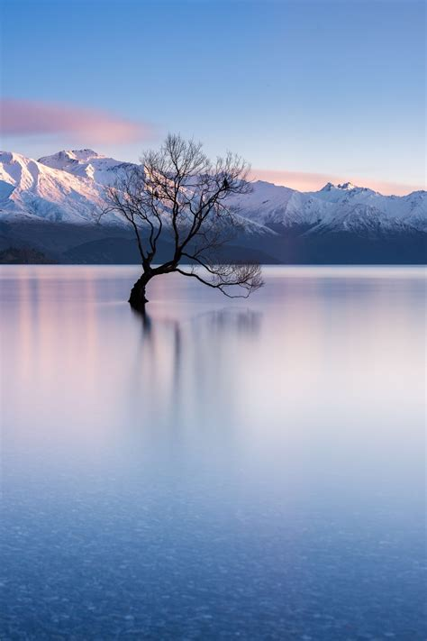 tattoo removal queenstown that wanaka tree wanaka new zealand probably the