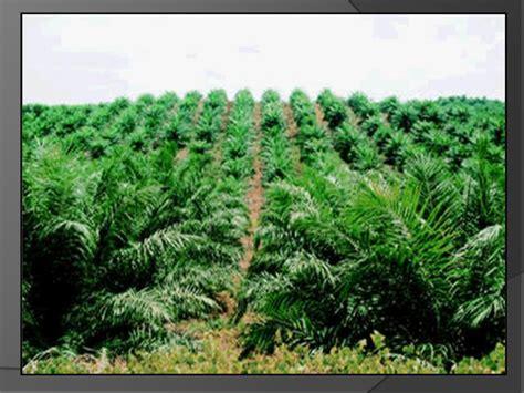 media news perkebunan kelapa sawit ingkar janji