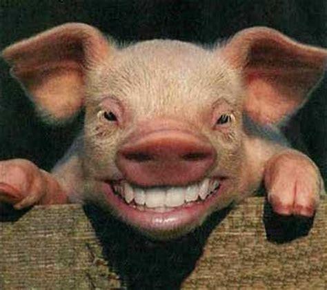 imagenes con movimiento que dan risa imagenes de animales que dan risa taringa