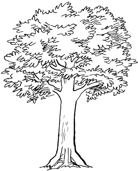 simple tree drawing tree drawings cliparts co
