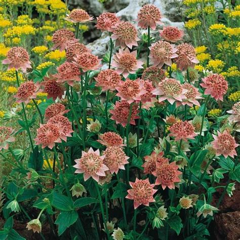 17 meilleures id 233 es 224 propos de plantes d ombre de jardin