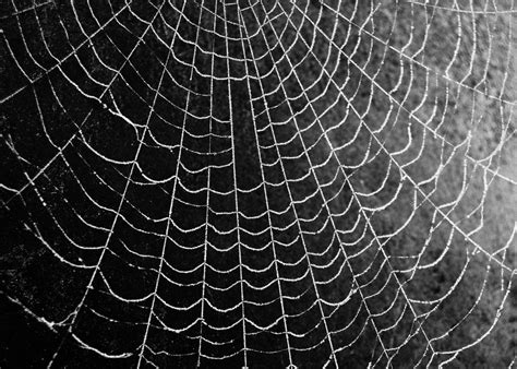 cool pattern photography frosty spider web black and white chris flickr