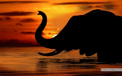 cool elephant wallpaper free halloween wallpapers mmw blog elephants wallpapers