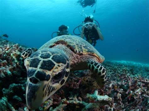 palau dive packages palau diving packages 6d5n ci xpert holidays