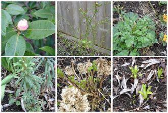 Ameisen Im Blumenkasten Bekämpfen by Magnolie Umpflanzen Magnolie Unterpflanzen Die Passenden