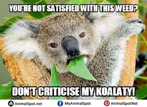 Koala Meme - angry koala bear meme www imgkid com the image kid has it