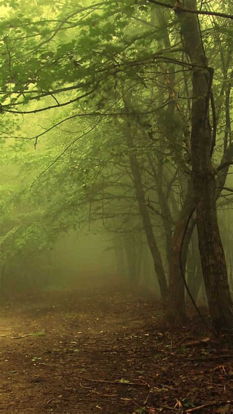 wallpaper iphone forest 17 best images about forest on pinterest trees