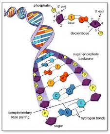 nucleotides and nucleic acids biolyst