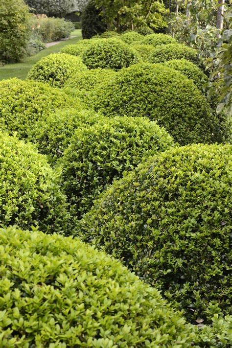 Houston Plant And Garden by Houston Plant And Garden Paradise Adding A Topiary To