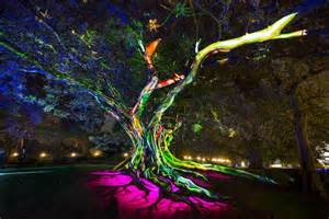 sydney tree lighting indigenous artists illuminate sydney opera house in light