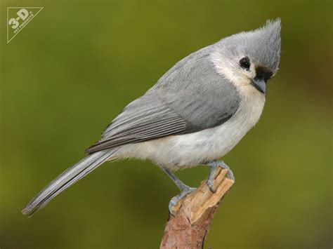 tufted titmouse 3d 174 pet products3d 174 pet products