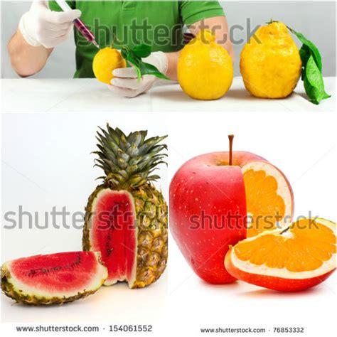 alimentos transgenicos productos transgenicos alimentos transgenicos ejemplos