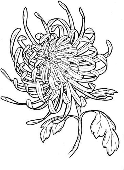 flower tattoo reference chrysanthemum drawing reference crafts pinterest