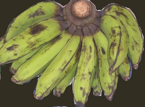 Keripik Pisang Kapas keripik pisang raja monyet