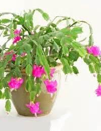 most common flowering house plants indoor house plants on house plants plants