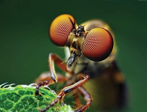 Wallpaper Fly, eye, macro, Animals #4496