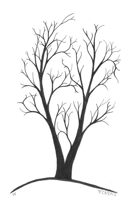 line drawings trees line drawing of tree clipart best