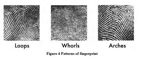 pattern types in fingerprint identification improve fingerprint recognition using both minutiae based