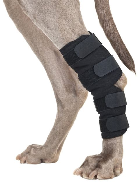 do dogs knees torn acl meniscus or ligament try these best knee braces