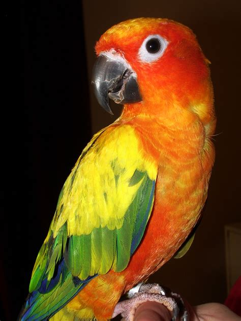 colorado pet lost found dogs cats parrots cockatiels ferrets co