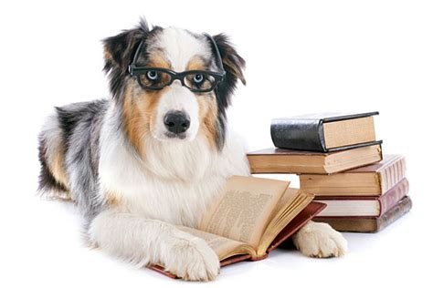 puppy studying receives degree from college with extremely shady reputation tsm interactive