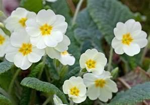 Norway Flowers - flower homes counties flowers of norway