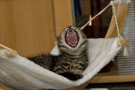 Gute Nacht Katzen Bilder by Gute Nacht Die 2te Foto Bild Tiere Haustiere Katzen