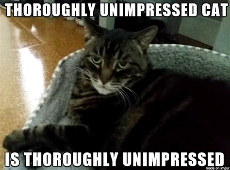 Unimpressed Meme - unimpressed cat memes image memes at relatably com