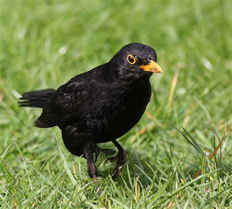 bempton birder common garden birds