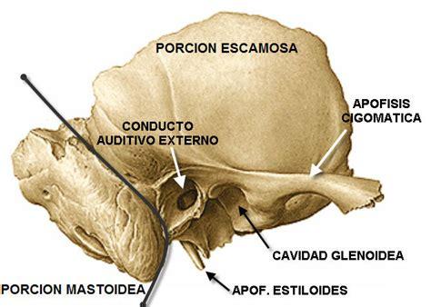 imagenes de huesos temporales hueso petroso pir 225 mide petrosa