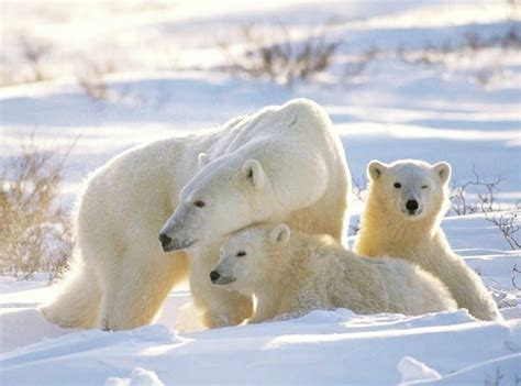 animals in the winter ultima thule winter whiteness