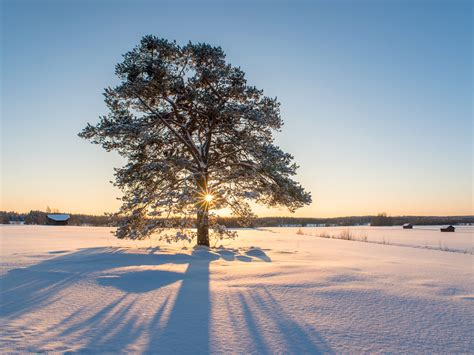 winter tree olaf schneider photography