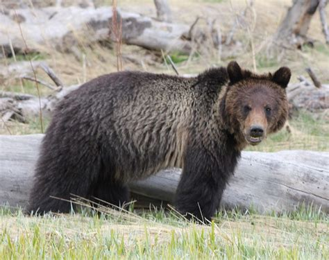 brown boat r yellowstone hey boo boo let s go get us a pic a nic basket grizzly