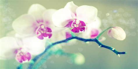 fiori sfondo fiori wallpaperart part 4