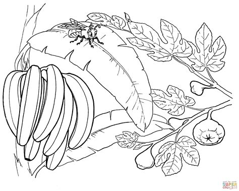 Banana Tree Coloring Page Coloring Home Banana Tree Coloring Page