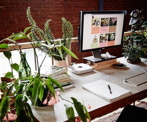best plant for office desk the best indoor plants for australian offices homes