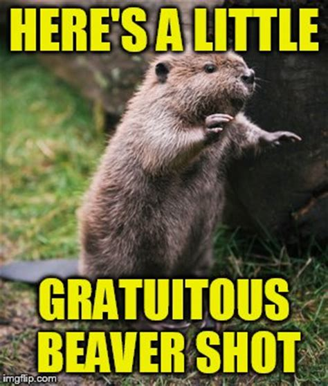 Beaver Meme - beaver meme 28 images beaver memes quickmeme 25 best