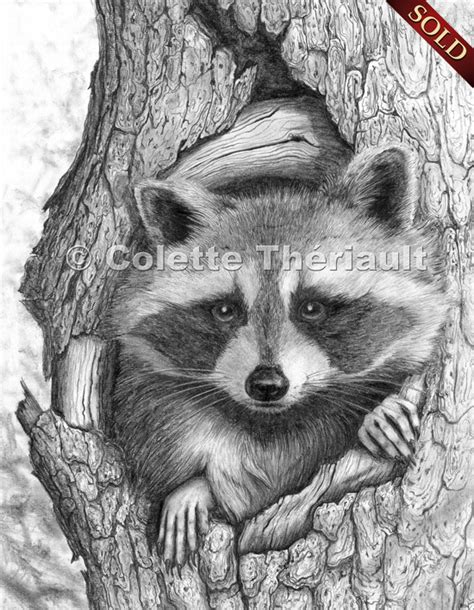 drawing and painting animals pencil drawings wildlife drawings in pencil