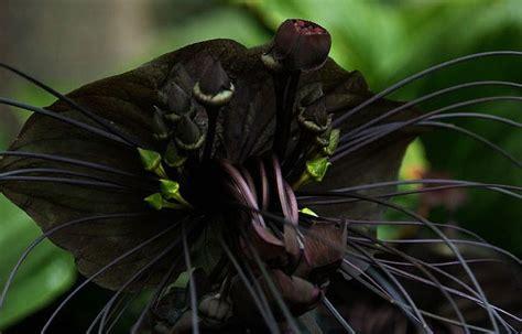 black flower garden spooks 5 scary plants the garden spotter