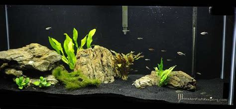 aquarium design with black sand getting another tank have aquarium advice aquarium