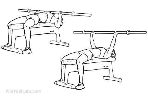 workouts with bench bar barbell bench press chest press illustrated exercise guide workoutlabs