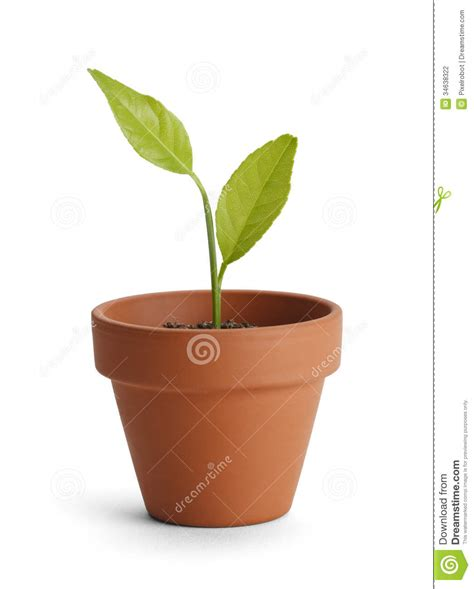 tiny potted plants tiny potted plants potted plant stock photo image of empty